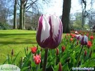 فصل الربيع Images?q=tbn:ANd9GcT4uF43vuwwb6m_3B26Wb4OxcFRL7sqAs-qDB94HgchWoZFXXhwCbeRVQLE
