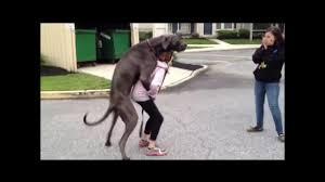 dog knotting porn|Zoo.cab
