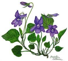 Contact : Confrérie de la violette : Christine Calas 6 avenue Camille Pujol 31500 Toulouse Tél : 05.61.34.10.15. calas.christine31@orange.fr. - violette