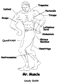 Woodworking Joints Worksheet by Skeletal And Muscular Systems Lesson Hubpages