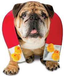 Dog Costumes Halloween 50 Adorable Halloween Dog Costumes Vittles Vault