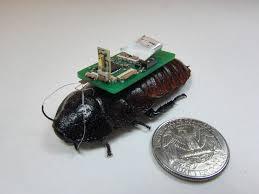 Tahmid Latif     s winning research uses roach bots