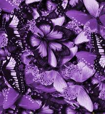 ������ ���� Butterflies-Bunches-Colorful-Violet.jpg