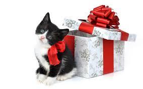 Vamos a ensayar la Navidad, a ver qué tal nos sale  Images?q=tbn:ANd9GcT8HBh6ZB0Eb4EAQWYb2hc52UckFqEYRsq8EzhaiySa3LBC_WjX
