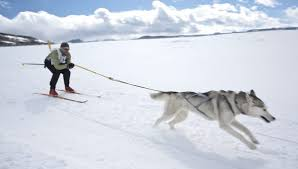 Skijoring is the Best Dog Sport You     ve Never Heard Of  and Should Try