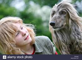 afghan hound long haired dogs afghanistan hound afghan hound canis lupus f familiaris