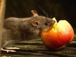 Si lor le plac merele...