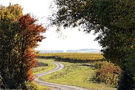 chemin agricole