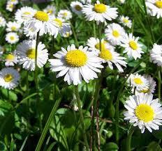 Natural herbs anxiety