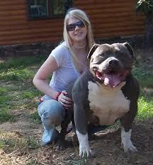 american pitbull terrier for sale in dallas texas muglestons pitbull farm pitbulls for sale pit bulls for sale