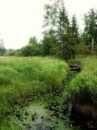 Mezha River