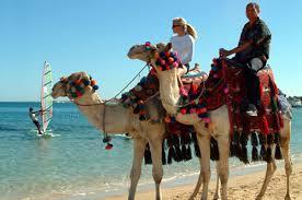 الصور تتكلم عن جمال الغردقه في مصر الحبيبه Images?q=tbn:ANd9GcTALWLqHCO3tJPt8zzI5pA4R0kD63GQuBT7SeGuuDScIJx0pV4d
