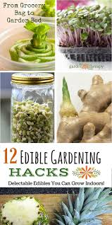 how to grow herbs indoors successfully garden therapy