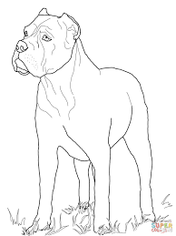 cane corso coloring page free printable coloring pages