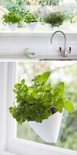 top 25 best window plants ideas on pinterest apartment plants