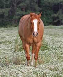 Udomi jednog od konja! - Page 6 Images?q=tbn:ANd9GcTCzb0k-KajF23PdFELFG3w0uSuSakGCejKUf4A3j4RTy3arOCbng
