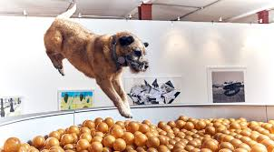 London Exhibit is First Art Show Created Just for Dogs   Rover com
