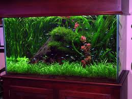 best 25 hexagon fish tank ideas on pinterest fish tank stand