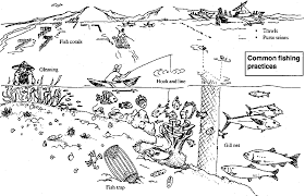 food web coloring pages coloring home