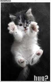 Cats hug?