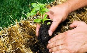 how to build a straw bale garden modern farmer