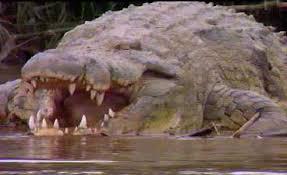 Los ríos más peligrosos del mundo y animales de cada uno d