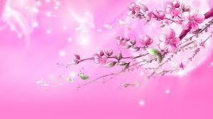 pink wallpapers hd pixelstalk net