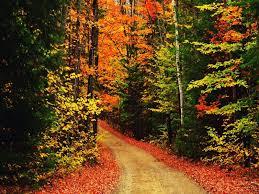 cute fall wallpaper backgrounds autumn wallpaper for mac wallpapersafari