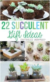 Succulents Pots For Sale by Craftaholics Anonymous 22 Succulent Gift Ideas