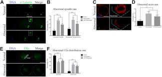effect of antifreeze glycoprotein 8 supplementation during
