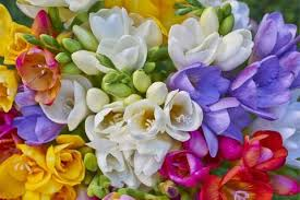 Flowers Cape Town Delivery - get well soon flowers delivery to hospitals and homes 021 674 7206