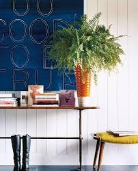best houseplants for low light popsugar home australia