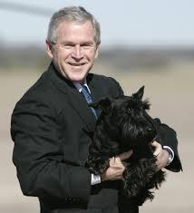 buy a affenpinscher should president trump get a dog al com