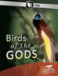 Birds Of The Gods (HD)