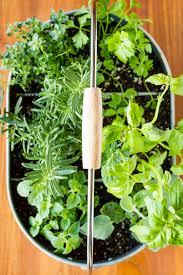 easy indoor herb garden simple 10 minute diy project