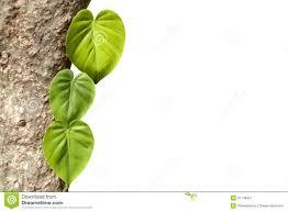 garden design garden design with climbing plants climbers uamp