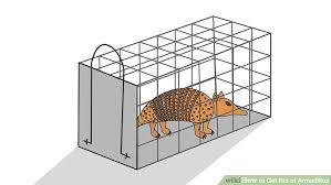 How Do You Get Rid Of Possums In The Backyard by How To Get Rid Of Armadillos 11 Steps With Pictures Wikihow