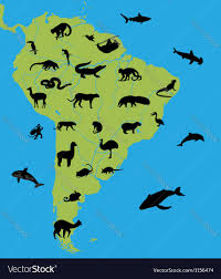 Map Of The South America by Map Of South America With Animals Royalty Free Vector Image