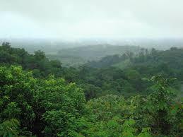 Située en Amérique du Sud, la forêt amazonienne est la plus Foret grange d...