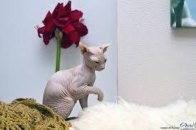 أروع صور قطط غريبة
