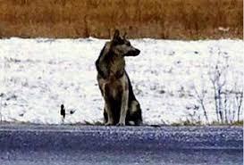 Cão espera por tutor morto em estrada e emociona moradores na ...