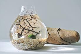coral sea nest aqua terrarium marimo ball japanese moss ball
