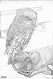 owl zealand coloring pages printable u0026 free