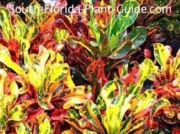 379 best florida landscaping images on pinterest landscaping