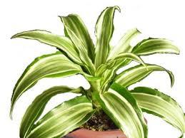 Combattere l'inquinamento domestico con le piante Images?q=tbn:ANd9GcTQwff0vVozeXENnZgLHdPNZ0IoAV3ZXDkQTkYqApmCKE7FeRL1