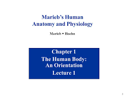 Anatomy And Physiology Chapter 1 Review Answers Welcome To Biology 101 Human Anatomy U0026 Physiology I Ppt Download
