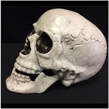 Life Size Skeleton Halloween by Life Size Halloween Skull Mad About Horror