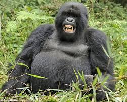 القرود انواعها  ونبذه عنها والصور Images?q=tbn:ANd9GcTSeS6xpfkrC2IcpWPXgAMTa56jUHsGd739YMJPdfmgfZHbm031