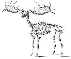 Vintage Halloween Printables by Instant Halloween Art Printable Download Walking Skeleton Man