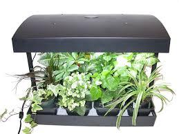 why do my indoor herb plants die herb gardening help